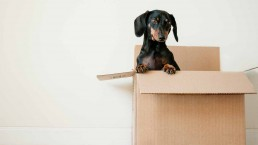 Dog out of the box